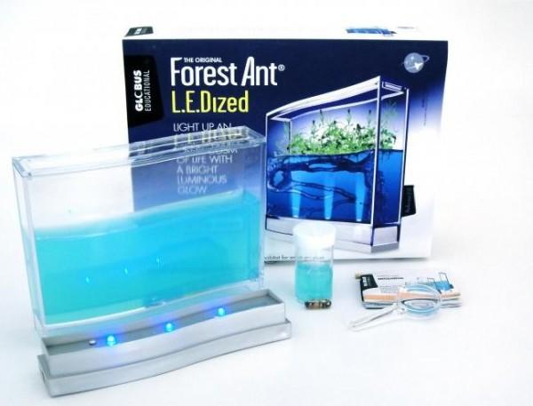 Forest Ant LEDized ANTQUARIUM SUPER FOREST MIT LED BELEUCHTUNG SET AMEISENFARM