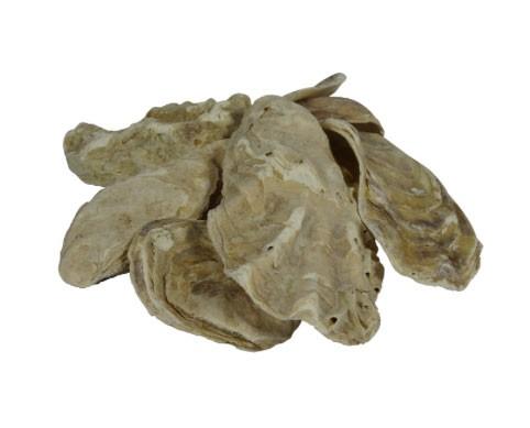 Austernschalen – KH und pH immer in Ordnung