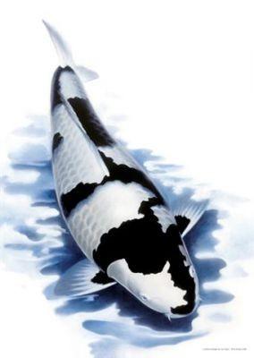 Koi Poster NEU Kunstdruck Koiposter Bild sw 1,schwarz/weiß, L: 59,5 x B: 42 cm limitierte Auflage