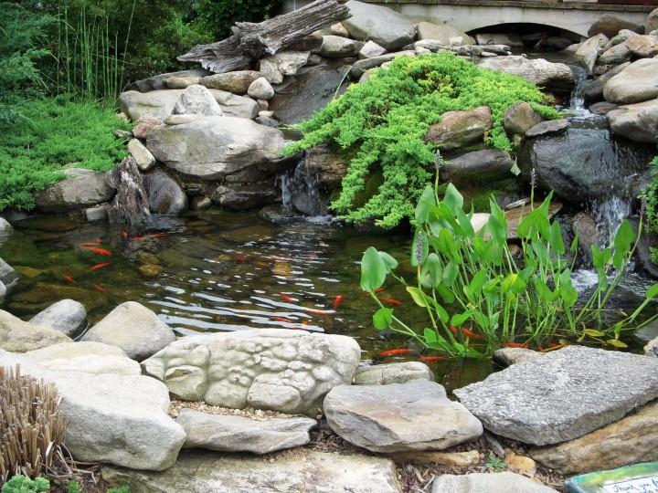 Wasserwerte-hanako-koi-magazin