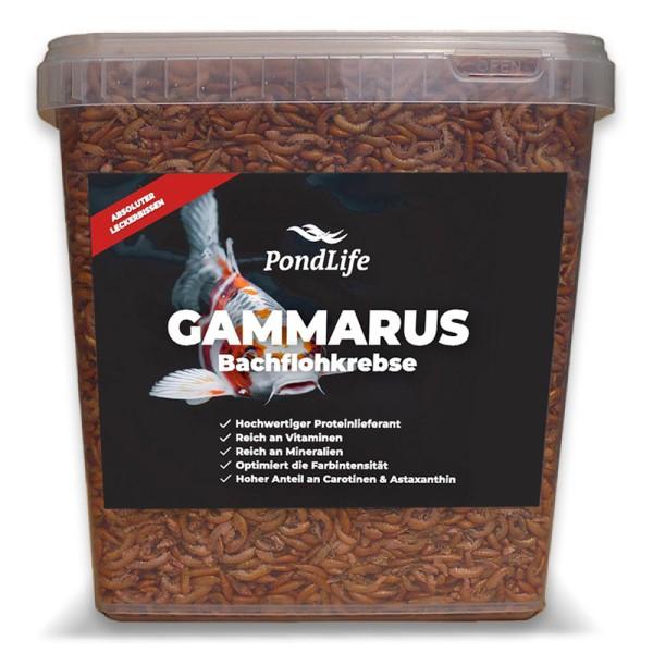 Gammarus (Bachflohkrebse|Koi Leckerbissen) von Pondlife