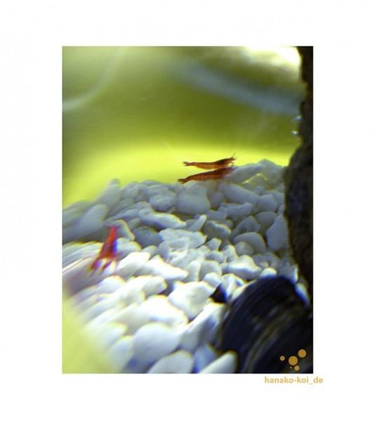 bioglobe-beachworld-plant-12-5-15-20-25-cm-mundgeblasene-glaskugel-