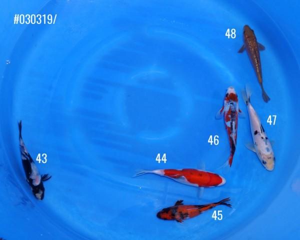 bowl-12, 40.00 EUR @ hanako-koi