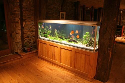 wohnen-mit-einem-aquarium-hanako-koi