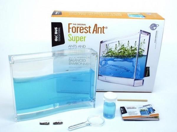Forest Ant Ecoterratium, ANTQUARIUM SUPER FOREST SET AMEISENFARM