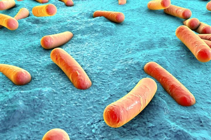 bakterielle-erkrankungen-bei-kois