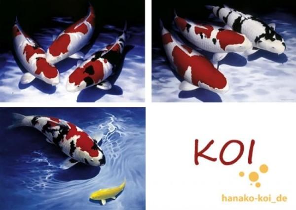 Koi Poster 3 Stück AL-Koi Kunstdruck 3er Set bunt, L: 84 x B: 60 cm limitierte Auflage
