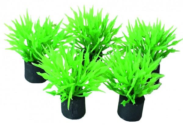Superfish Easy Plants Nano Plug 5 Stk.