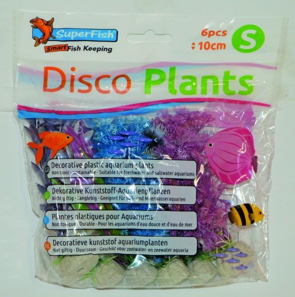 Superfish Disco Plants 6 Stk.